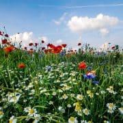 Allergie frei durch Hypnotherapie
