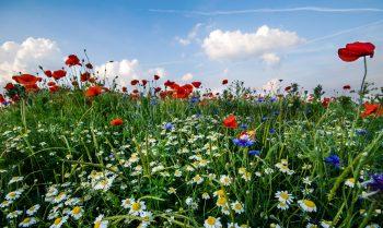 Allergie behandeln Hypnose Hannover/Hameln/Bielefeld Heilpraktiker Psychotherapie und systemisches Coaching - Nils Sturies - NLP Master Coach, Hypnosetherapeut und Kommunikationstrainer