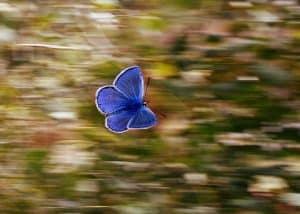 Was ist Trance? -Hypnose in Detmold/Lippe/Bielefeld/Hameln/Hannover Selbstorganisatorische Hypnose medizinischen Zentrum in Detmold Hiddessen - Psychotherapie mit Nils Sturies - NLP Master Coach, Hypnosetherapeut Psychotherapeut